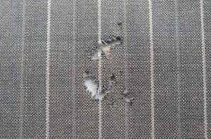Wool fabric eaten by clothes moth