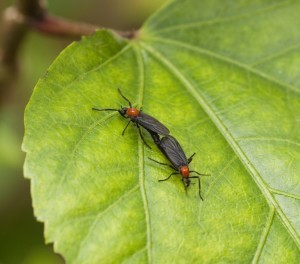 LOVEBUGS MATING