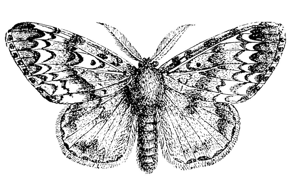 Gypsy Moth Control And Treatments For The Yard And Garden