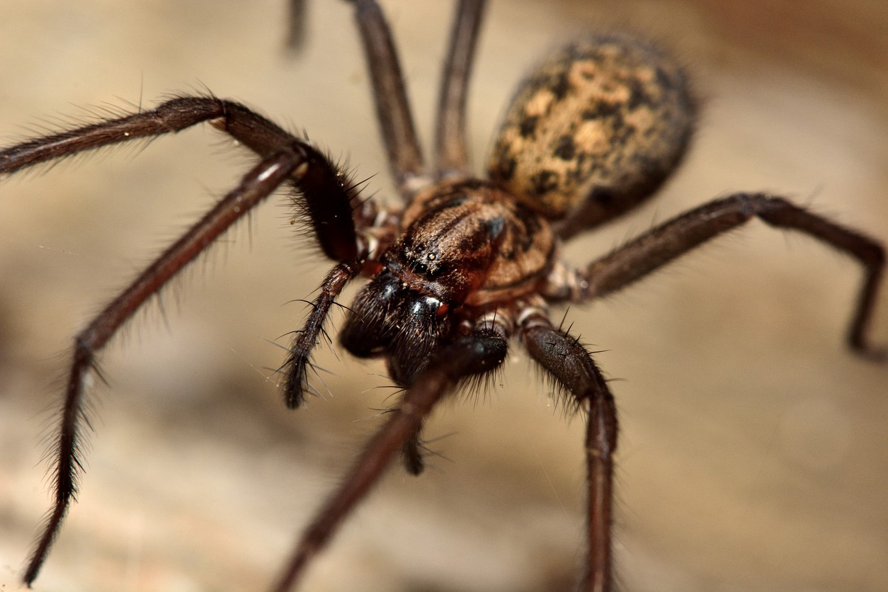 spider control and treatments for the home yard and garden