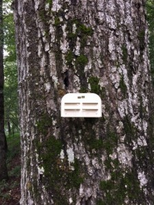 INSECT BAIT STATION TREE MOUNT
