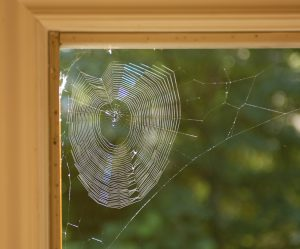 Spider web on window