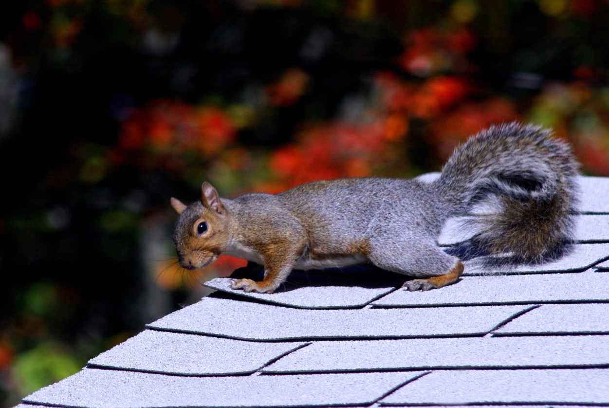 Squirrel Control And Removal Methods For The Home Yard And