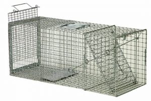 GROUNDHOG TRAP