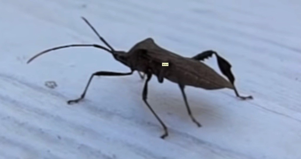 Image Result For Bug Spray Companies