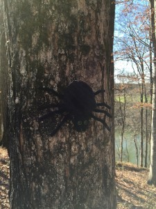 SPIDER ON TREE