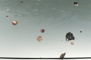 Insect or bird poo?