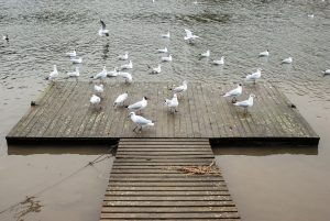 Seagulss making a mess on my dock