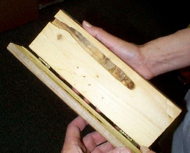 Carpenter bee control treatments in atlanta ga for How to treat barn wood for bugs