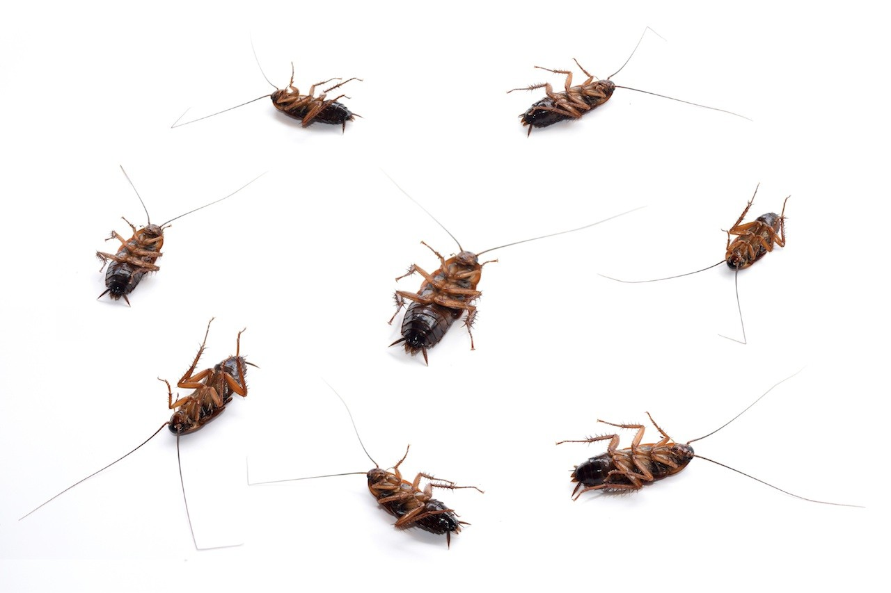 roach control spray and bait treatments for the home