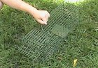 Green Trap