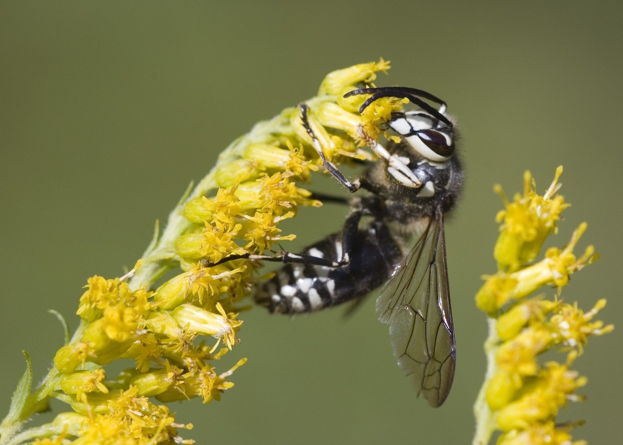 Wasp treatments and repellent sprays for use on the home and