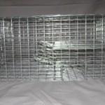 Bi Level Sparrow Trap