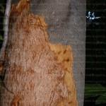 Porcupine tree damage