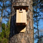BLUE BIRD BAT HOUSE